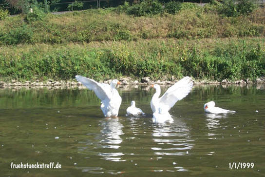 singles limburg an der lahn Nettetal